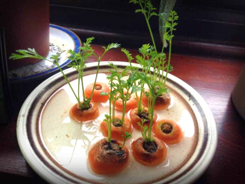 Grow your own carrots.