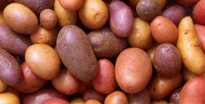 The Potato Hack Weight Loss Simplified Tim Steele Latest in Paleo 158